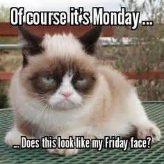 Grumpy Cat Monday Meme - 1000 images about the grumpy cat on pinterest grumpy cat grumpy cat meme and memes