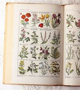 281 best images about pattern: botanical | vintage ...