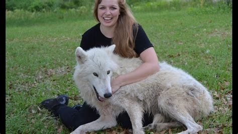 Wolf Encounter Wolf Encounter Seacrest Wolf Preserve Florida Music