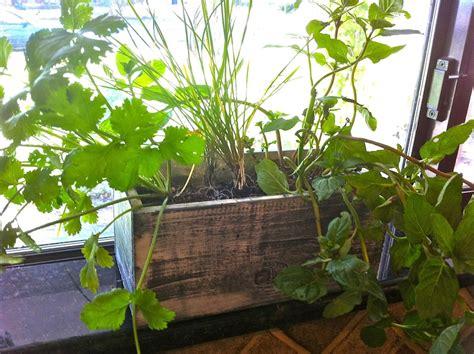 growing an indoor herb garden sanctuary soil