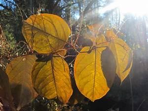 Die Farben Des Herbstes : bild laub bl tter natur sonne von mony hemetsberger ~ Lizthompson.info Haus und Dekorationen