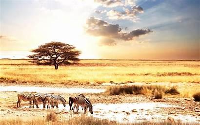 Africa Wallpapers Desktop African South Savanna Safari