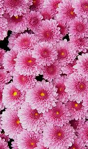 Pink Flower Wallpaper For Phone   2021 Cute Wallpapers