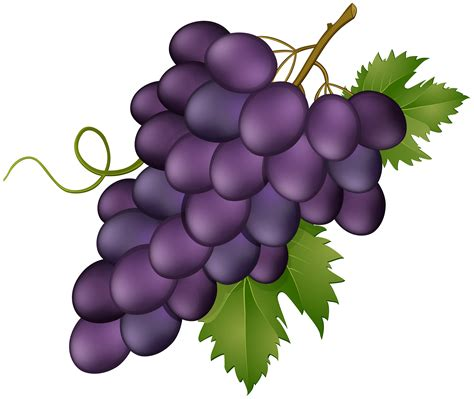 grape pink transparent png clip art image gallery yopriceville high