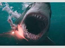 The Shallows How to build a CGI shark London Evening