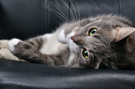 side effects  medications  anxiety  cats petmd