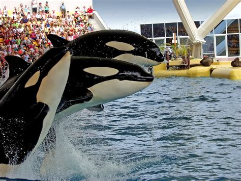 Seaworld San Diego Skip The Line Tickets Top Rated Tours
