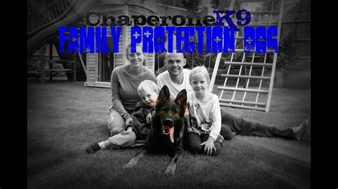 chaperone  family protection dog youtube