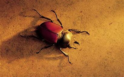 Beetle Wallpapers Minimalist 1920 Cervo Volante Lucane