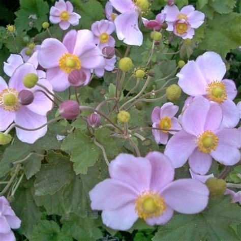 plantes et fleurs d ombre