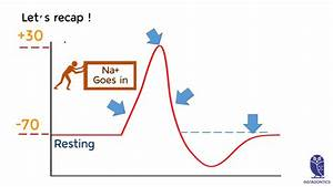 Action Potential Chart Explained