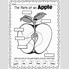 Drawn Apple Kindergarten Worksheet  Pencil And In Color