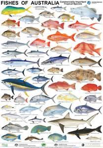 fish names australian fish poster fisherman tackle pinterest fish