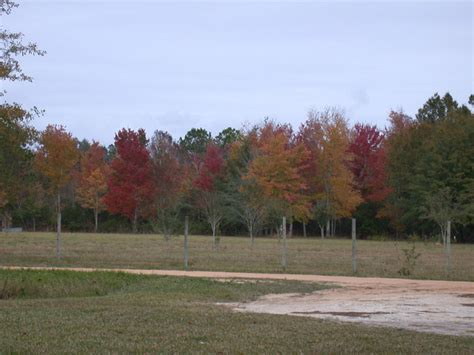 fall foliage florida florida fall colors by acfr204 photo weather underground