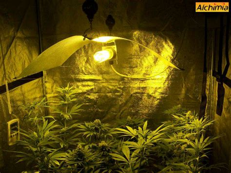 chambre cannabis culture interieur de cannabis du growshop alchimia