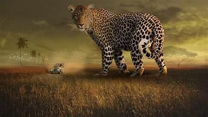 Safari 4k Leopard Wallpapers Giraffe Wildlife Giant