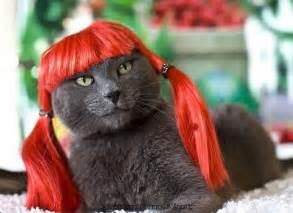 cats colorful makeover kitty wigs xcitefun net