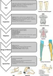 Low Back Pain Physical Examination