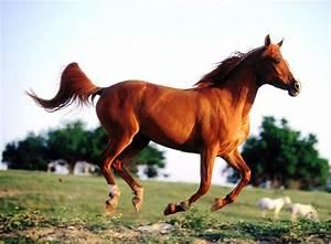 HD Horse Wallpapers-Animals Wallpaper 2012|Girls Desktop ...