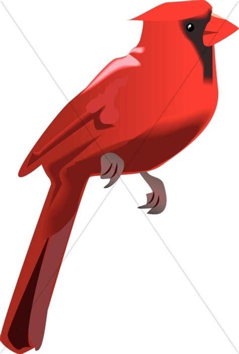 cardinal perched