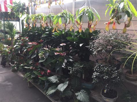 Gale S Garden Center Willoughby by Gale S Garden Center Maple Heights Home