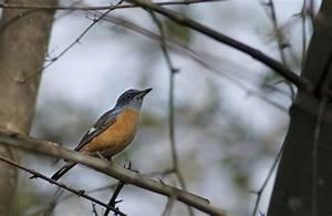 Bird survey finds 4 rare species in Sanjay Gandhi National ...