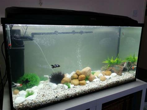poisson eau froide pour aquarium 28 images shandra auteur 224 poisson naturel page 9 of 43