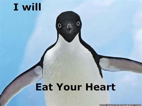 Penguin Memes - penguin meme pictures to pin on pinterest thepinsta