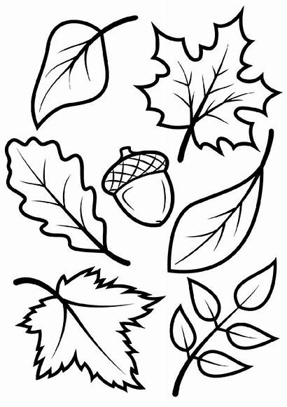 Coloring Fall Pages Leaves Leaf Printable Template