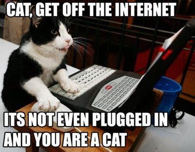 Internet Cat Meme - week 2 communicating on the internet touche