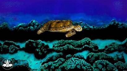 Turtle Sea Bodypainting Johannes Painting Human Stoetter