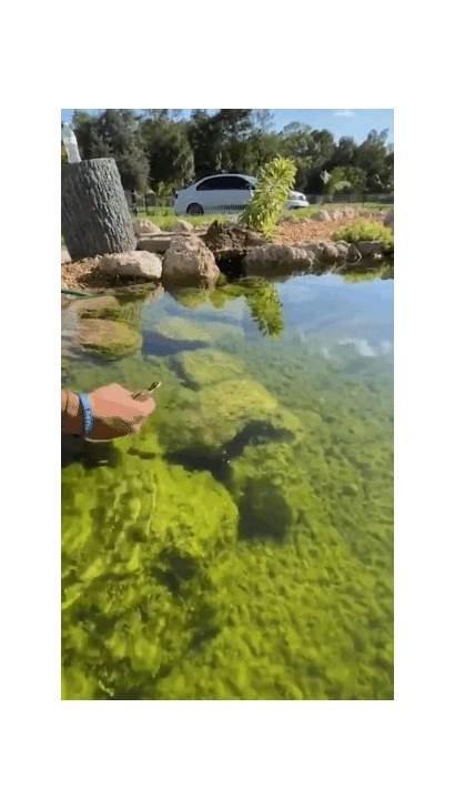 Amazing Gifs Water Run Lizard