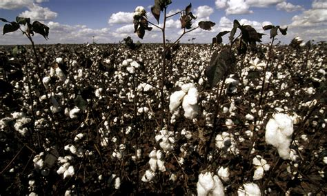 The Impact Of A Cotton Tshirt  Stories Wwf