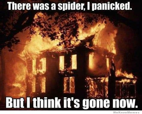 Spider In House Meme - man burns down house to kill spider what s trending