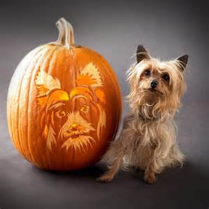 Boston Terrier Pumpkin Pattern by Tallando A Tu Perro En Una Calabaza Para Halloween Gu 237 A