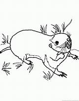 Gopher Coloring Pages 123coloringpages Animal sketch template