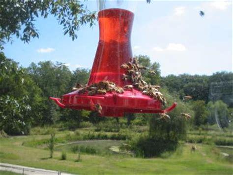 how to keep honey bees away from hummingbird feeders keeping bees out of the hummingbird feeder thriftyfun