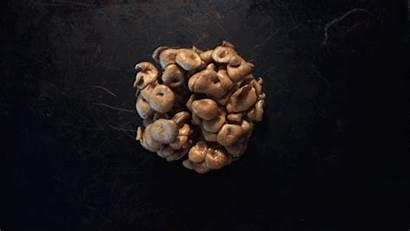 Oyster Mushrooms Butter Types Recipe Mushroom Brown