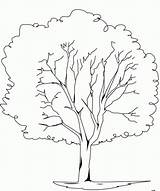 Coloring Tree Elm sketch template