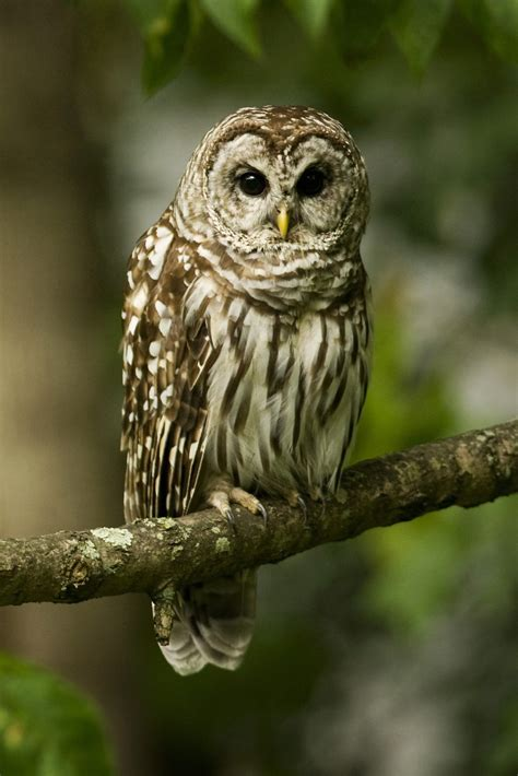 Owl Phone Wallpapers by Owl Wallpaper Iphone 2019 3d Iphone Wallpaper