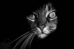 Schwarz Weiß Bilder : fotografie coole katzen in schwarz wei klonblog ~ Bigdaddyawards.com Haus und Dekorationen