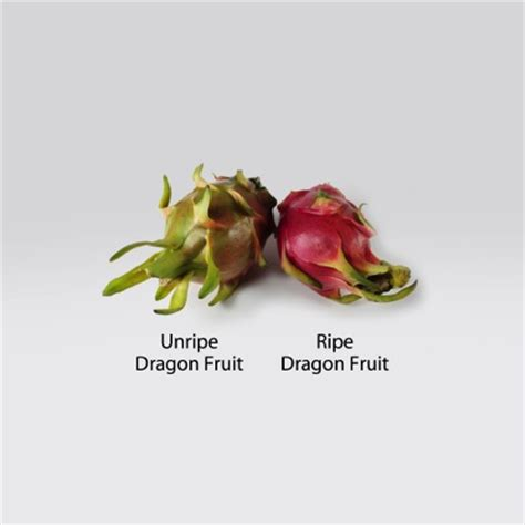 titan gel dragon fruit dried all the shop vimaxbanyumas com organic dragon fruit chips