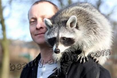 Pets Raccoon Pet Unusual Care Raccoons Exotic