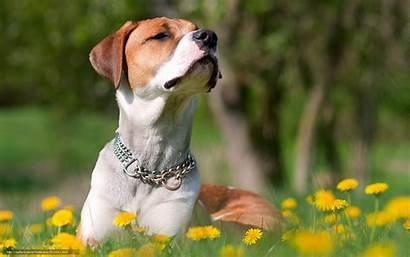 Desktop Orgulloso Dog Puppy Perro Cane Orgoglioso