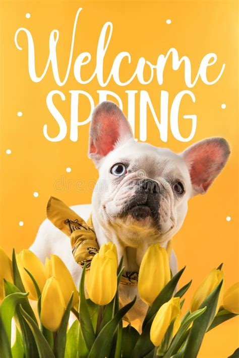 Welcome Spring Funny Stock Photos - Download 172 Royalty ...
