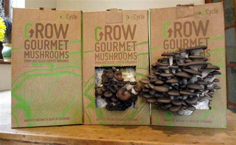 sustainability uks  urban mushroom farm launches