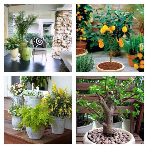 plante chambre idee deco chambre a coucher 13 plante en pot pour