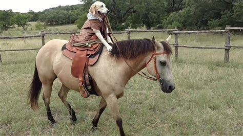riding dog horse pony funny rides woman