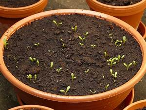 Quand et comment faire ses semis