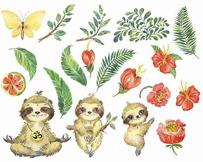 Watercolor Jungle Animal Clipart Sloth Tropical Painting